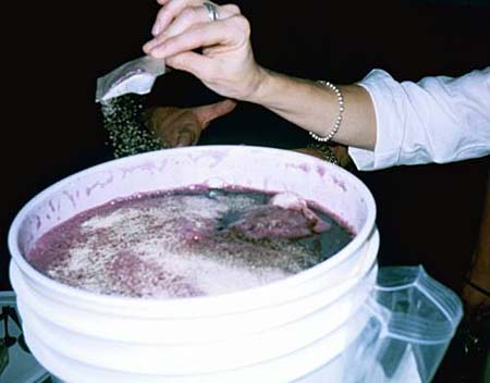 how to kill yeast in wine
