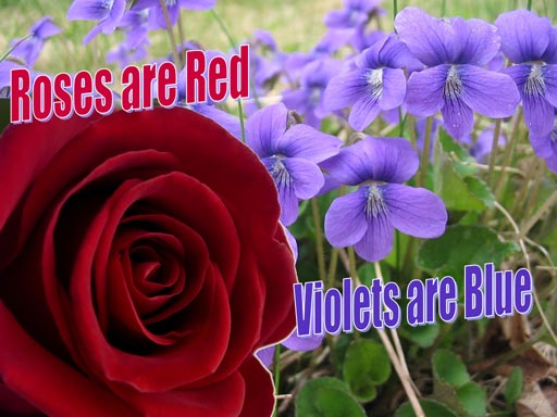 Roses Are Red Violets Are Blue Quotes. QuotesGram