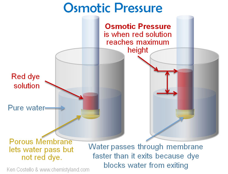determining the rate of osmosis with Processes of diffusion and osmosis learn the factors that affect the rate of diffusion 2 observe brownian motion and relate this observation to the concept of heat energy 3 measure the speed of diffusion of dyes  diffusion and osmosis page 40 d add the following solutions to each bag, exclude the air, then fold and close.