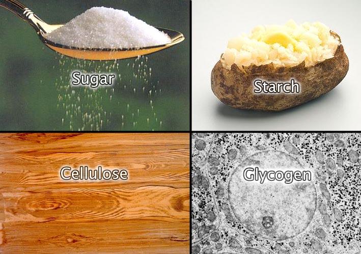 Building Organic Compounds