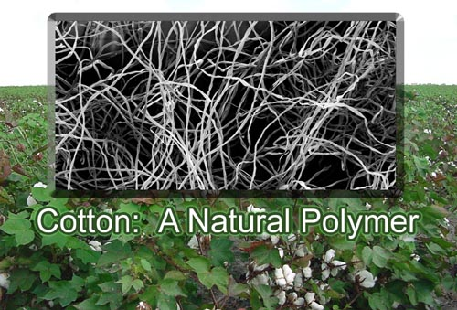 examples of natural polymers